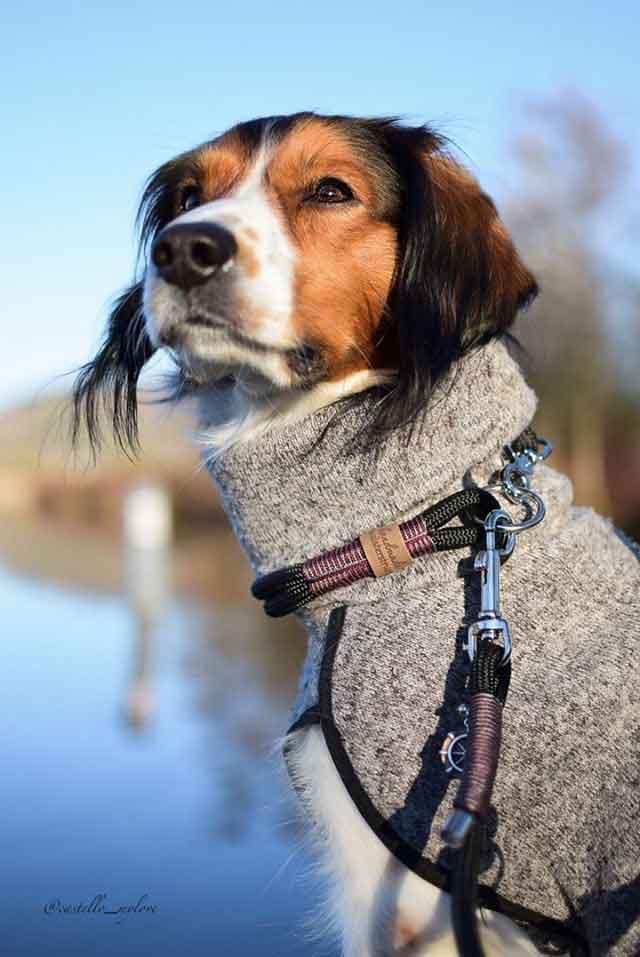 Hund mit Halsband und Leine